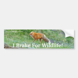Fox Wildlife Protection Bumper Sticker Car Bumper Sticker