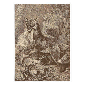 Fox With His Kill Postcard