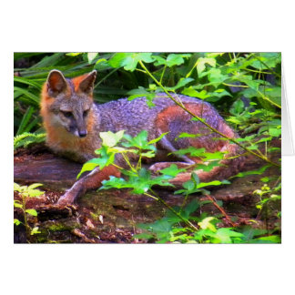FOXES GREETING CARDS