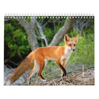 Foxes of Brigantine Beach Photo Calendar