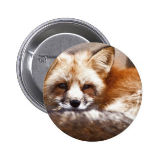 Foxes Pinback Button