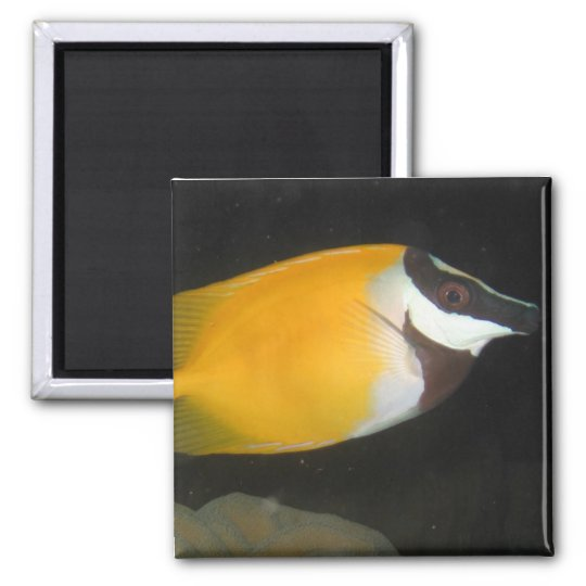 Foxface Rabbitfish Magnet
