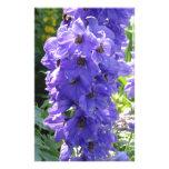 Foxglove azul salvaje  papeleria