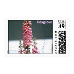 Foxglove Beauty Postage Stamps