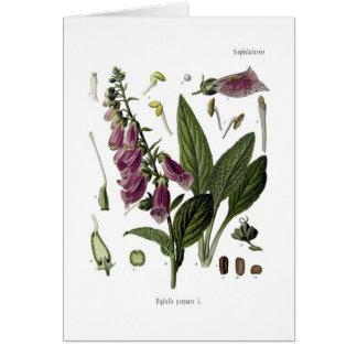 Foxglove Greeting Cards