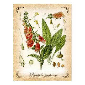 Foxglove común - ejemplo del vintage tarjetas postales