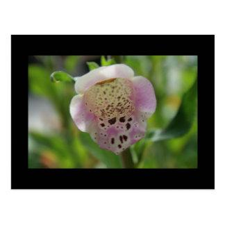 Foxglove Flower Postcard