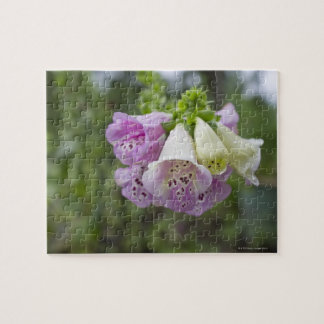 Foxglove flowers. jigsaw puzzle