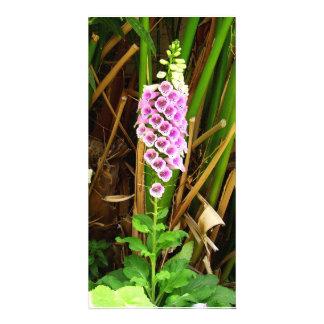 Foxglove natural beauty photo card