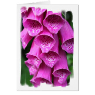 Foxglove Plant Greeting Card
