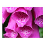 Foxglove Plant Postcard