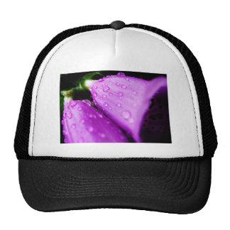Foxglove púrpura con las gotas de agua gorras