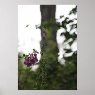 Foxglove púrpura contra la foto de Bokeh del tronc Impresiones
