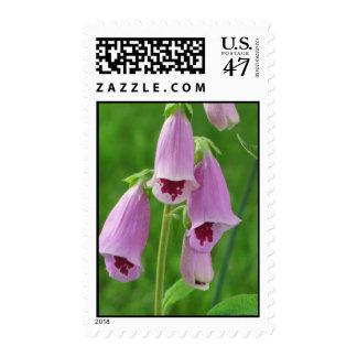 Foxglove Shades of Pink and Burgundy Digitalis Postage