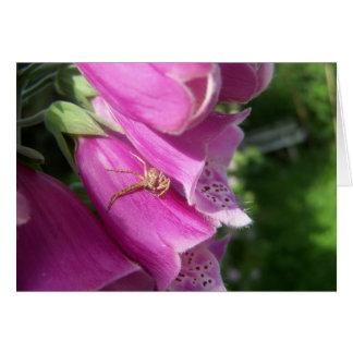 Foxglove spider card