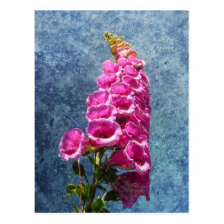 Foxglove with texture reaching for the sky. postcard
