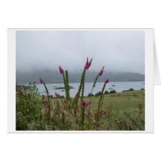 Foxgloves e isla irlandeses de la cebada tarjeta pequeña