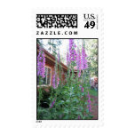 Foxgloves in a summer garden postage