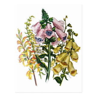 Foxgloves Postcard