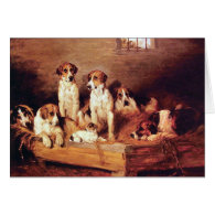 Foxhounds and Terriers Cards