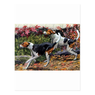 Foxhounds Postcard