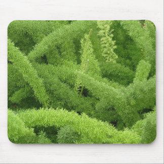 Foxtail Fern Asparagus densiflorus myers Mouse Pad