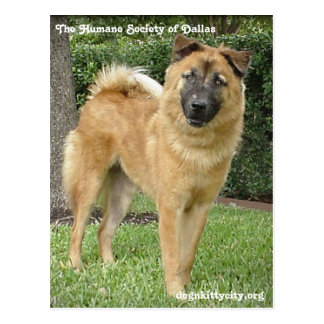 Foxter - The Humane Society of Dallas Postcard