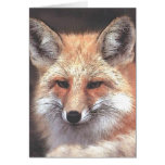 foxy cards