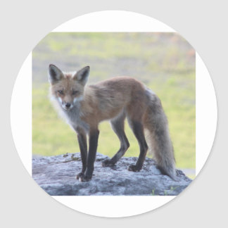 Foxy Momma Classic Round Sticker