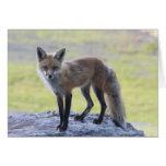 Foxy Momma Greeting Card