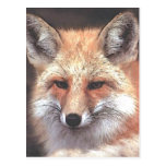 foxy post cards