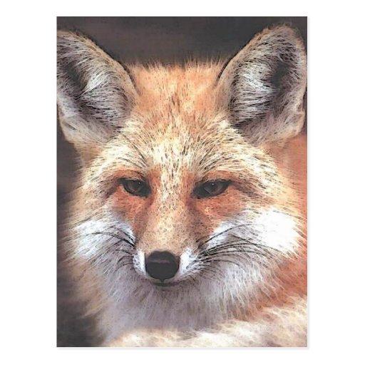 foxy postcard