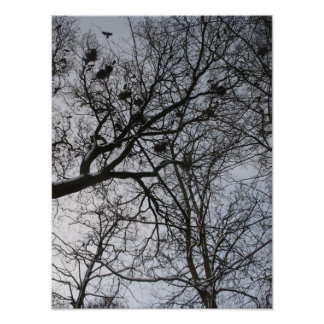 Fractals in Nature: Crows Photo Poster Art