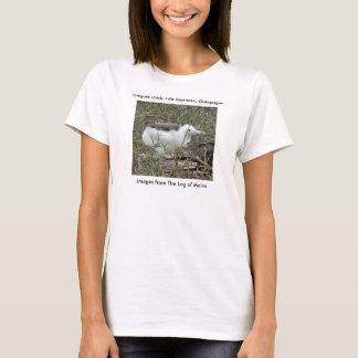Fragata (frigate bird) chick, Isla Seymour, Galapa T-Shirt