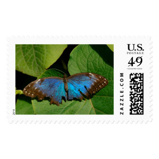 Fragile Butterfly Postage Stamp