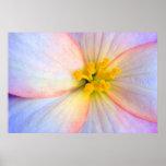 Fragile flower poster