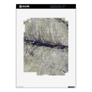 Fragile Fossil Plant Leaf iPad 2 Skin