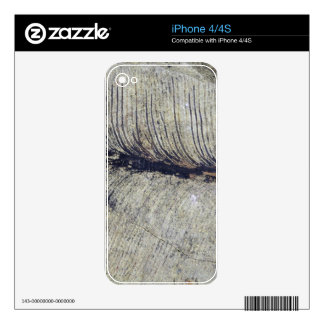Fragile Fossil Plant Leaf iPhone 4S Skins