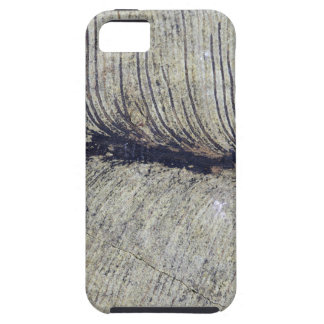 Fragile Fossil Plant Leaf iPhone SE/5/5s Case