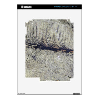 Fragile Fossil Plant Leaf Skin For iPad 3