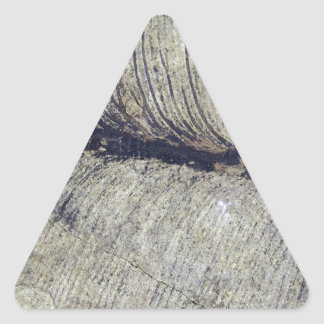 Fragile Fossil Plant Leaf Triangle Sticker