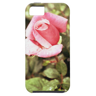 Fragile Pink Rose Vibe iPhone 5 Case