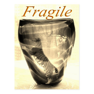 Fragile Tiger Postcard