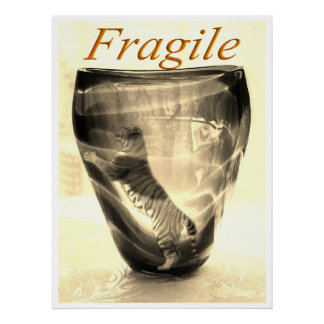 Fragile Tiger Poster