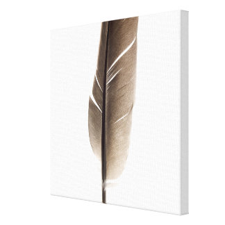 Fragile white feather gallery wrapped canvas