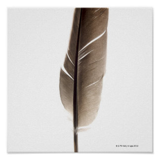 Fragile white feather poster