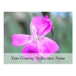Fragrant Garden Pinks Postcard