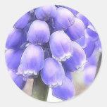 Fragrant Muscari Blooms Classic Round Sticker
