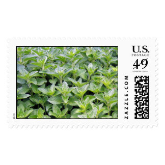 Fragrant Oregano Postage Stamps