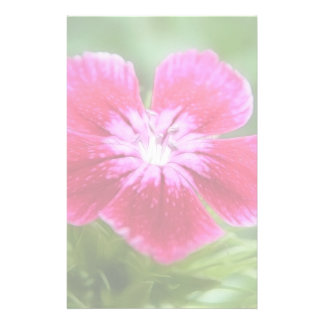 Fragrant Pink Sweet William Blossom Stationery